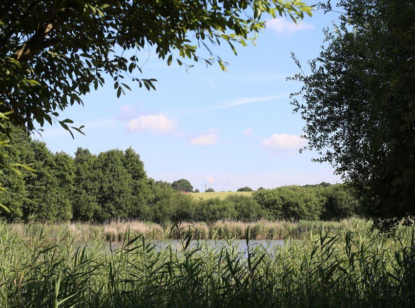 BEA_Landscape_Design_birch_coppice_IM2