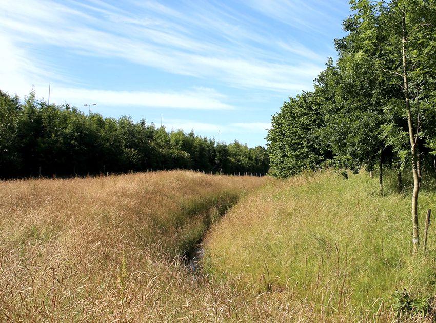 BEA_Landscape_Design_birch_coppice_IM3