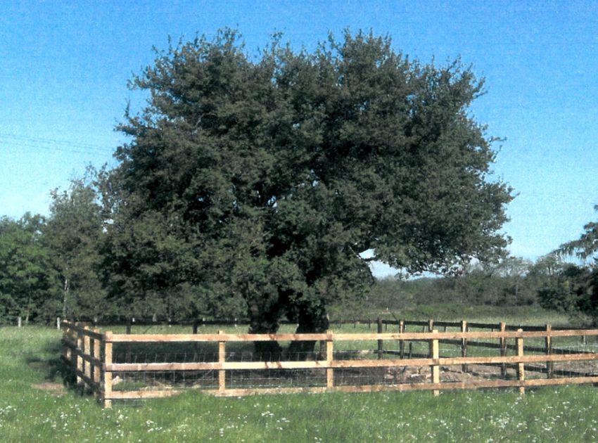BEA_Landscape_Design_tree_translocation_2